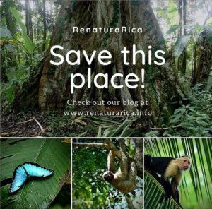 renaturaRica Regenwald erhalten